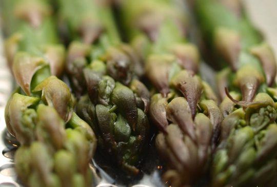 Image: Serranosvøpte asparges med vinaigrette a la Santa Pola